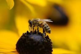 Hledáme včelího projektového a account manažera