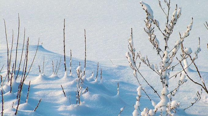 Shrnutí - 11 Lednových článků Na Blogu Včeliště