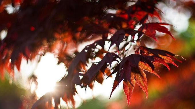 Shrnutí - 14 Listopadových článků Na Blogu Včeliště