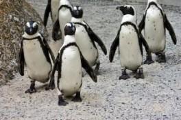 Penguin 2.0- Další vylepšení Google algoritmu