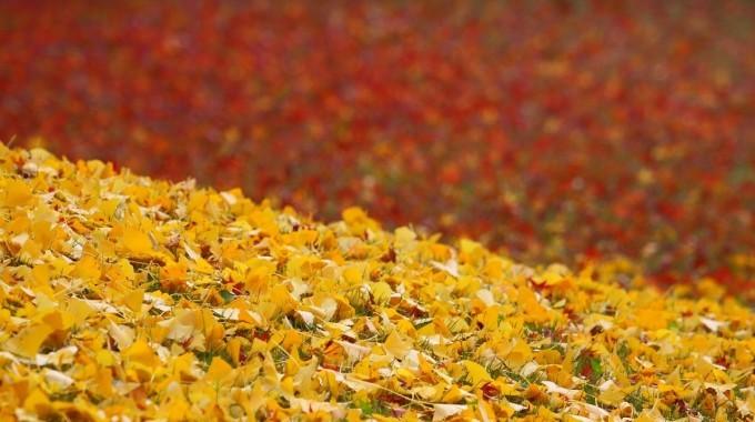 Listi Podzim